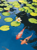 Buy Koi Pond II at AllPosters.com