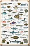 Buy Sea Fish at AllPosters.com