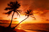 Buy Tropical Beach, Sunset at AllPosters.com
