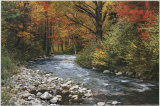Buy Forest Creek at AllPosters.com