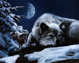 Sleeping Wolf and Lookout