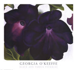 Black and Purple Petunias Art Print