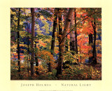 Buy Maples and Birches at AllPosters.com