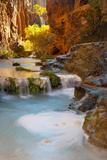Sunlight Illuminates Cottonwoods Above Havasu Creek and Its Falls