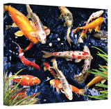 Buy George Zucconi 'Koi' Wrapped Canvas at AllPosters.com