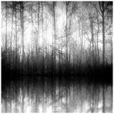 Buy Forest Mist at AllPosters.com