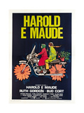 HAROLD AND MAUDE, (aka HAROLD E MAUDE), Italian poster, from left: Ruth Gordon, Bud Cort, 1971