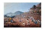 Breaking Up the Land, from 'ten Views in the Island of Antigua', 1823