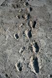 Trail of Laetoli Footprints.