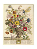 November, from 'twelve Months of Flowers' by Robert Furber (C.1674-1756) Engraved by Henry Fletcher Giclee Print