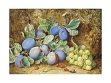 Plums and Grapes, 1877