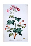 Sweet Canada Raspberry [Rubus Odoratus], Illustration from 'The British Herbal' by John Edwards,…