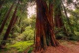 Buy Welcome to Muir Woods 4 at AllPosters.com