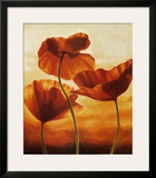Poppies in Sunlight II