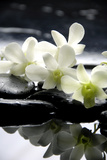 Zen Stones And Branch White Orchids With Reflection