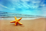 Buy Starfish On The Beach - Best For Web Use at AllPosters.com