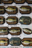 Buy Singing Bass Fish Plaques, Little Rock, Arkansas, USA at AllPosters.com