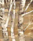 Wandering Through the Birches II