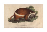 Buy Wolverene or GluttonGulo Gulo (Ursus Luscus) at AllPosters.com