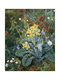 A Still Life of Polyanthus and Butterfly