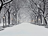 Central Park in Winter Art Print