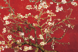 Buy Almond Blossom - Red at AllPosters.com