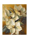 Magnolias Aglow at Sunset II