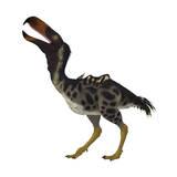 Kelenken Is an Extinct Genus of Giant Flightless Predatory Birds