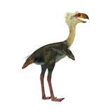 Phorusrhacos, an Extinct Genus of Flightless Predatory Birds