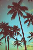 Vintage Tropical Palms