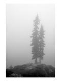 Two Trees on Mount Washington
