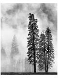 Buy Yosemite Misty Pines Black and White at AllPosters.com