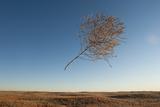 A Tumbleweed Blows Through the Air