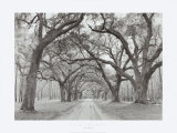 Buy Oak Arches at AllPosters.com