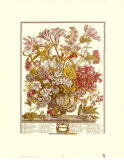 Twelve Months of Flowers, 1730, October Art Print