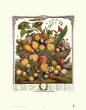 Twelve Months of Fruits, 1732, July