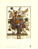 Twelve Months of Flowers, 1730, November Art Print