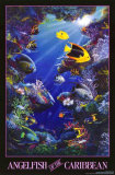 Buy Angelfish of the Caribbean at AllPosters.com