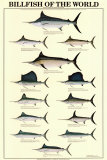 Buy Billfish of the World at AllPosters.com