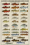 Buy Eastern Gamefish Identification Chart at AllPosters.com