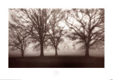 Buy Fog Tree Study IV at AllPosters.com