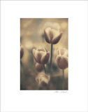 Tinted Tulips III Art Print