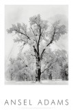 Buy Oak Tree, Snowstorm, Yosemite National Park, 1948 at AllPosters.com