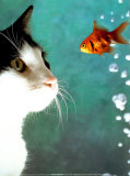 Buy Cat and Fish at AllPosters.com
