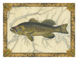 Buy Black Bass on Map at AllPosters.com