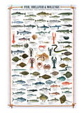 Buy Fish Shellfish and Mollusk at AllPosters.com