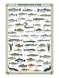 Buy Freshwater Fish at AllPosters.com