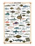 Buy Sea Fish at AllPosters.com