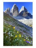 Buy Tre Cime di Lavaredo, Sexten Dolomites, Province of Bolzano, South Tyrol, Italy at AllPosters.com