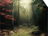 Buy Legendary Forest in Brittany at AllPosters.com